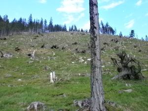 Baumfriedhof.