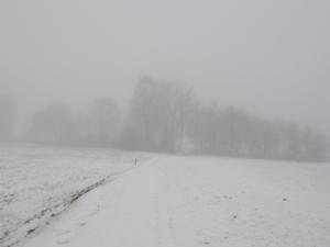 Nebel,noch immer, mal wieder.
