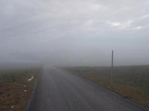 Am Güterweg bei Schafberg.