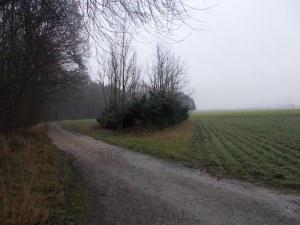 Im Lindetwald bzw an dessen Rand. Rechts ist St. Marienkirchen schon zu sehen.