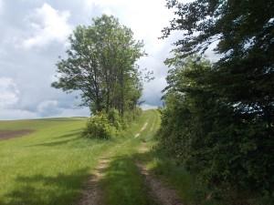 Zwischen Wiesen und Waldflecken.