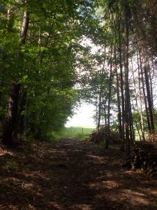 Aus dem Wald, auf die Wiese.