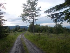Bergab Richtung Waldsauerbrunn.