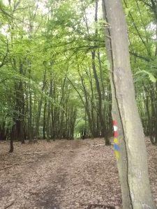 Noch ein Stück im Wald bis zur Bahntrasse.