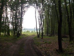 Im Pöttschinger Wald.