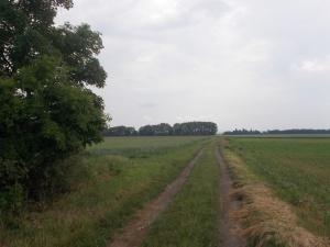 Feldweg.