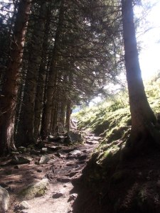 Waldausgang zur Almfläche beim Ghf Alpenrose.