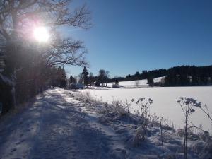 Am Oberen Rosenhofer Teich.