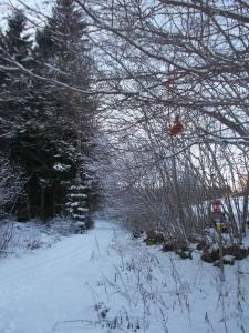 Kurz abseits der Straße. Hinter Steinwald.