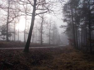 Im Punitzer Gemeindewald treffe ich wieder auf die Forststraße.