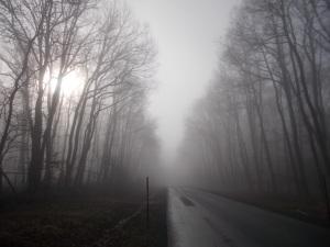 Auf der Straße durch den Punitzer Wald.