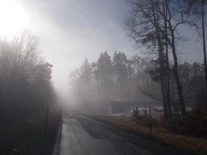 Die Sonne versucht sich. Weiterhin am Straßenhatscher durch den Punitzer Wald.